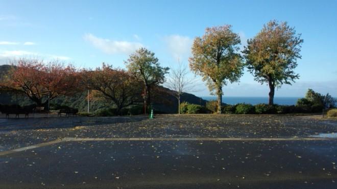 秋らしい写真がとれました!!